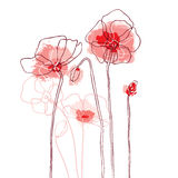 Red poppies on a white background Royalty Free Stock Photo