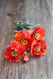 Red poppies on wooden table Stock Images