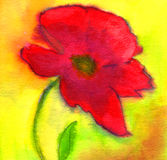 Red Poppy. A large red poppy against a bright background. Watercolour painting Royalty Free Stock Photo