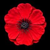 Red poppy. A red poppy on black Royalty Free Stock Photo