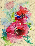 Red Poppy. Watercolor poppies on texture paper royalty free illustration
