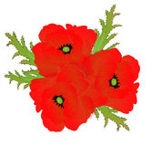A red poppy Stock Photography