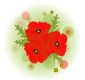 A red poppy Royalty Free Stock Photos