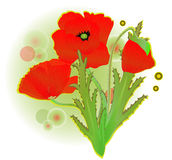 A red poppy Royalty Free Stock Photo