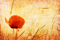 Free Red Poppy Stock Photos - 3190393