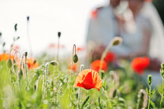 Red poppy background wedding couple at sunny day.  Stock Image