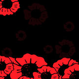 Red poppy on the black background Stock Photo