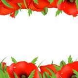 Red Poppy Border. Vector Illustration Royalty Free Stock Photo