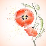 Red Poppy Bouquet Royalty Free Stock Images