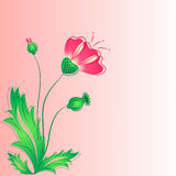 The red  poppy with buds and leaves. Royalty Free Stock Photo