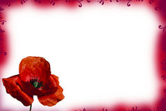 Red poppy card Royalty Free Stock Photography