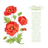Red poppy card. Royalty Free Stock Images