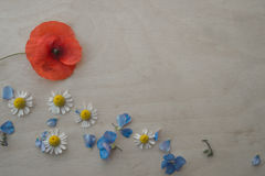 Red poppy and chamomiles with blue petals on the wooden background Stock Photography
