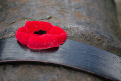Red Poppy Close-Up On Cannon Gun Barrel Stock Image