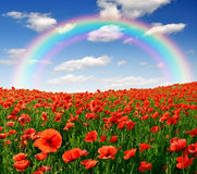 Red poppy field. Rainbow above the spring landscape with red poppy Royalty Free Stock Photo