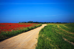 Red poppy field Stock Photography
