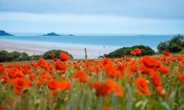 Red poppy field near sea, Brittany Stock Photos