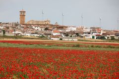 Red poppy field and small town Stock Image