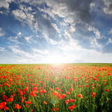 Red poppy field in the sunset Stock Photo