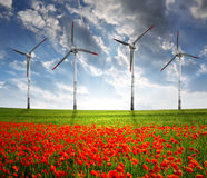 Red poppy field with wind turbine. In the sunset Royalty Free Stock Images