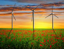 Red poppy field with wind turbines Royalty Free Stock Images