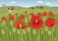Red poppy fields Stock Photo