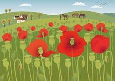 Red poppy fields Stock Photo