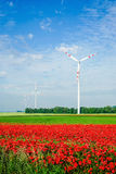 Red poppy filed with windmill Royalty Free Stock Photo