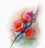 Red poppy floral watercolor painting Stock Photography