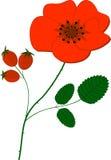 Red poppy flower vector illustration