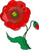 Red Poppy Flower. Vector Illusstration Royalty Free Stock Photos