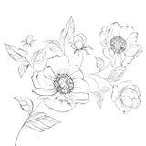 Red Poppy Flower. Royalty Free Stock Photos