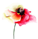 Red Poppy flower. Watercolor illustration Stock Images