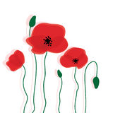 Red poppy flowers background Royalty Free Stock Photos