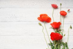 Red poppy flowers bouquet on white rustic wooden surface. Stock Images