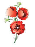 Red Poppy Flowers Royalty Free Stock Photography