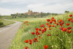 Red poppy flowers on a countryside road Royalty Free Stock Photography