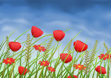 Red poppy-flowers and daisies on summer meadow. Under blue sky Stock Photos