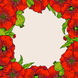 Red poppy flowers. Frame background Stock Photos