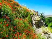 Red poppy flowers and green grass near castle Alcazar in Segovia, Spain stock photos
