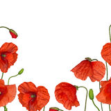Red poppy flowers half frame isolated on white Royalty Free Stock Photos