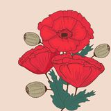 Red poppy flowers invitation card Stock Images