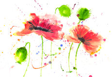Red poppy flowers modern art style watercolor painting Stock Images