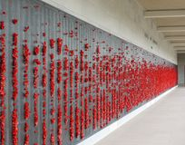 Red poppy flowers at the names of killed soldiers by war Royalty Free Stock Images