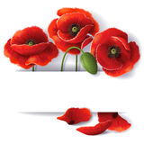 Red poppy flowers. With space for text Stock Photo