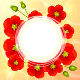 Red poppy flowers vector round background Royalty Free Stock Photo