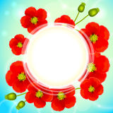 Red poppy flowers vector round background Stock Photos