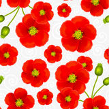 Red poppy flowers vector seamless pattern Stock Image