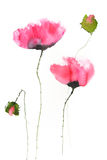 Red poppy flowers , watercolor illustrator Stock Photo
