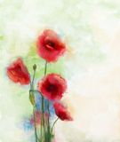 Red poppy flowers watercolor painting. For background Stock Photos